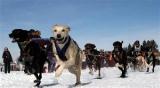 championnat d'Europe de chiens de traîneaux