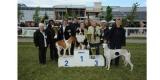 Expo canine internationale de Marmande