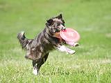 premier concours de frisbee canin de la région Rhône Alpes