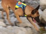 Concours de chien de sauvetage à Saint Laurent du Var
