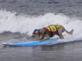 Un championnat international de surf pour chiens en Californie