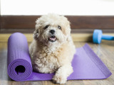 Le fitness canin