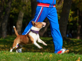 Adapter l'activité de son chien à ses besoins physiques et mentaux