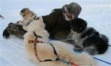 Arktika : Là où les hommes dépendent des chiens