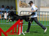 Règlement des concours d'obéissance canine