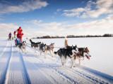 Iditarod (courses de chiens à traîneaux)