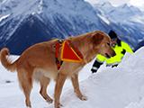 Championnat du Monde FCI de chiens de sauvetage 2014