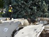 Chiens Belgique  -  Concours Rescue Dogs