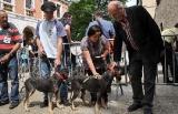 Limoux (11)  Les chiens de chasse étaient à l'honneur