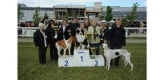 Expo canine internationale de Marmande