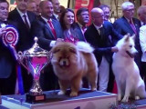 Metz, 4 et 5 juin 2016: Championnat de France des chiens de race