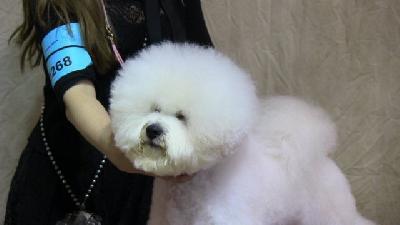 Un millier de chiens au salon de l 39 agriculture for Salon des chiens