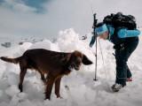 Savoie -  Concours de chiens de sauvetage / avalanche