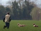 Eauze · Gers - Les chiens d'arrêt s'affrontent