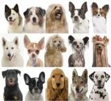 400 chiens débarquent à Paris les 14 et 15 avril !