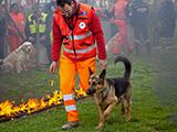 Chiens de sauvetage du Revermont - Avril 2012