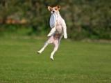 Le frisbee pour chien, un sport en vogue