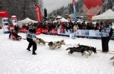 Les athlètes canins se préparent à la