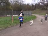 Le Canicross, un sport à pratiquer avec son chien