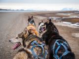 Les sports de traîne sur terre : cani-cross, cani VTT, pulka verte et cani kart