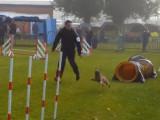 Concours d'agilité en compagnie d'un Border Terrier