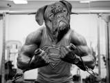 Sport canin : quels sports pratiquer avec son chien ?