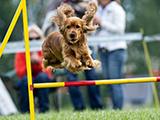 Une journée concours d'agility