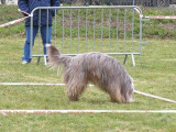 Sport canin : qu'est-ce que le cavage ?