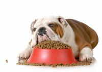 Gamelle pour chien : cas d'un chien glouton