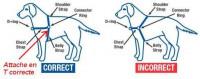 Choisir la taille du harnais easy walk pour son chien
