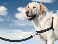 Les particularités du harnais pour chien easy walk