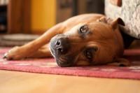 Un couchage dédié au chien est-il vraiment nécessaire ?