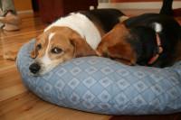 Quel panier ou coussin pour un chien âgé ?