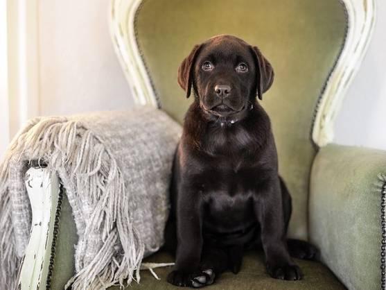 panier coussin tapis corbeille comment choisir le couchage de son chien. Black Bedroom Furniture Sets. Home Design Ideas