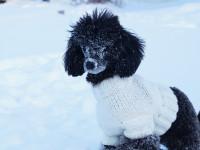 Choisir le manteau idéal pour votre chien