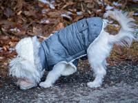 Le rôle des manteaux pour chien