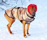 Les différents modèles de manteaux pour chien