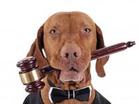 Porter plainte dans les délais légaux