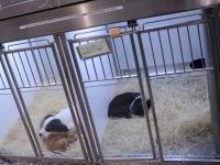 Cela permet de limiter l'enrichissement des animaleries et leurs pratiques douteuses