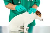 Le coût des traitements anti-parasitaires pour chien