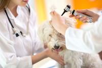 Le coût des interventions vétérinaires chez le chien