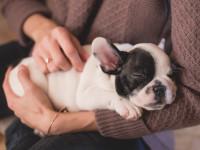 Pouvez-vous vous adapter à votre chien ?