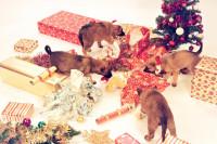 Noël, le bon moment pour offrir un animal ?