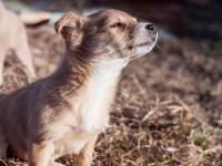 Adopter un chien chez un particulier