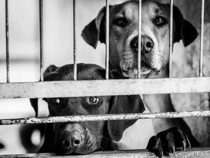 animalerie   u00e9leveur canin  refuge      o u00f9 adopter un chien