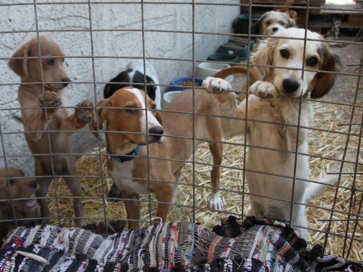 Adopter Un Chien Dans Un Refuge Animalier