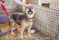 Le comportement du chien de refuge