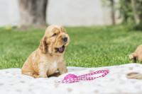 L'importance de choisir un nom de chien clair