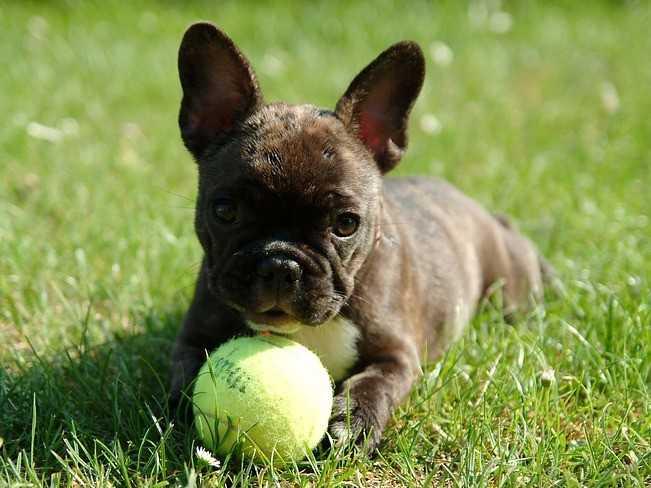 Les chiens pour faire connaissance [PUNIQRANDLINE-(au-dating-names.txt) 28