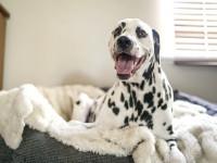 Souscrire une assurance complémentaire canine